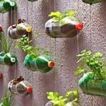Repurposed liter bottles for plants