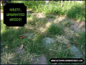 Nasty Weeds