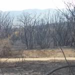 Peeples Valley